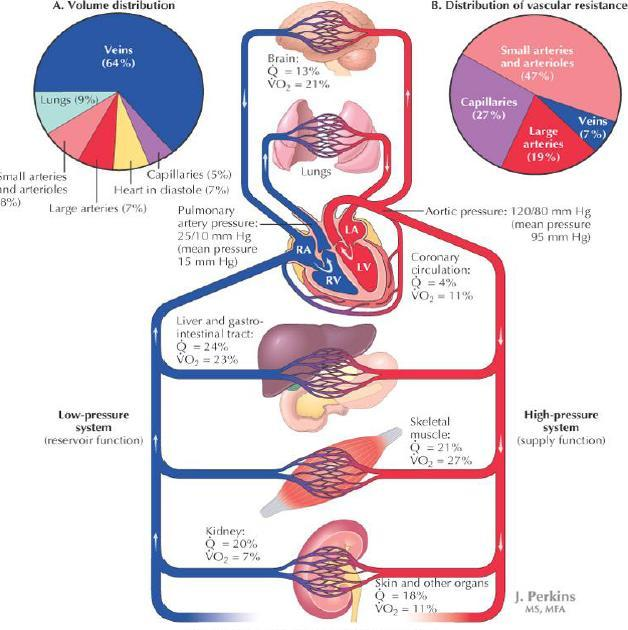 Quotes About Cardiovascular System 48 Quotes