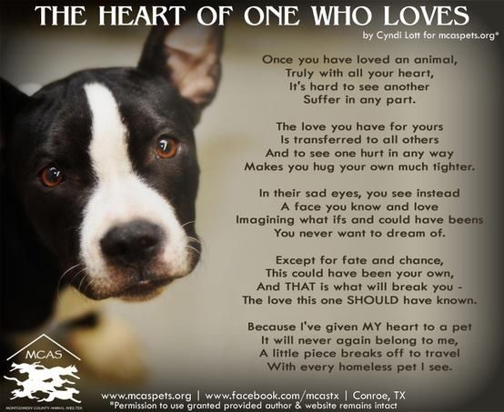 TOP 40 DOG RESCUE QUOTES of 40 AZ Quotes Classy Rescue Dog ...