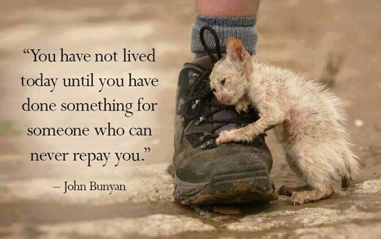 Quotes About Love For Animals 51 Quotes