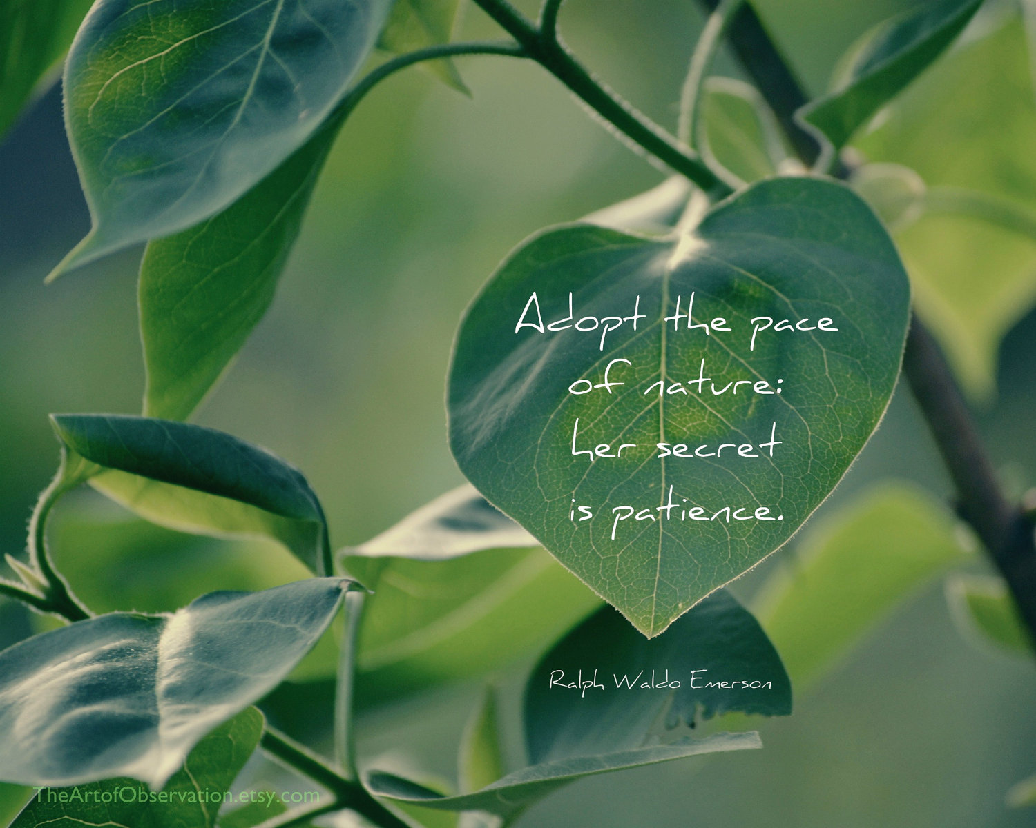Quotes About Peace Of Nature 87 Quotes