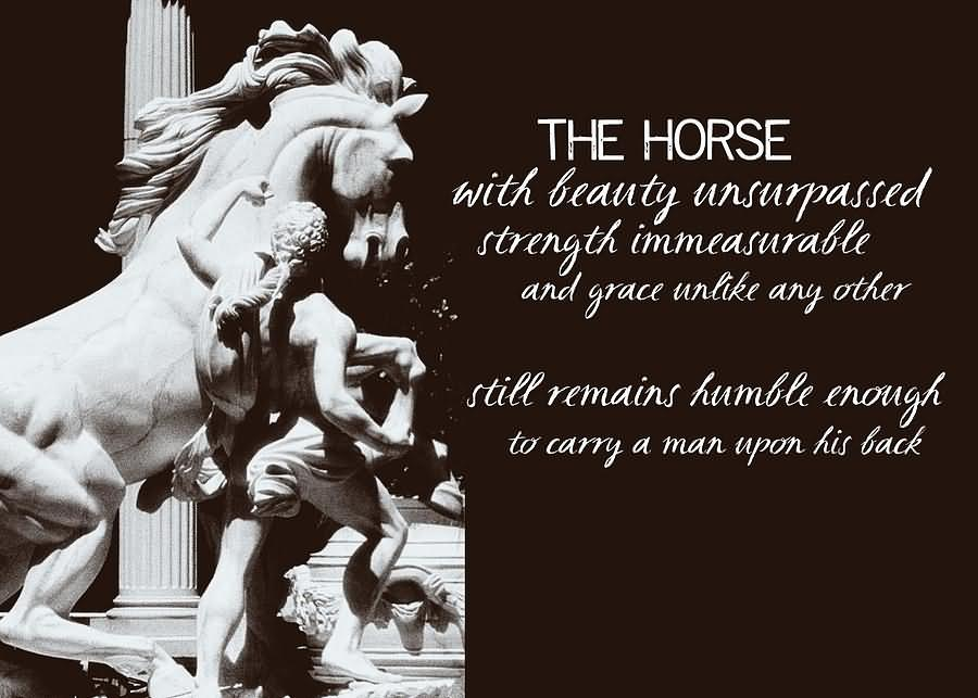 Quotes About War Horses 33 Quotes