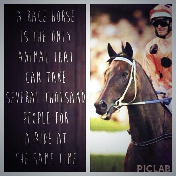 Horse Racing Phrases