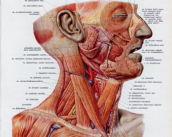 quotes about neck muscles (24 quotes), Muscles