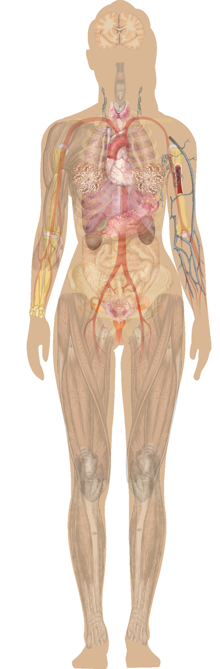 Quotes About Body Organs 71 Quotes