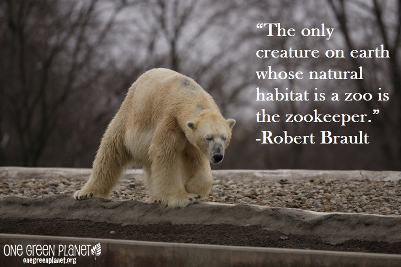 Quotes About Animal Advocates 27 Quotes