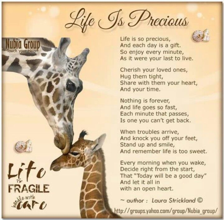Quotes About Life Is Precious 60 Quotes Gorgeous Life Is Precious Quotes