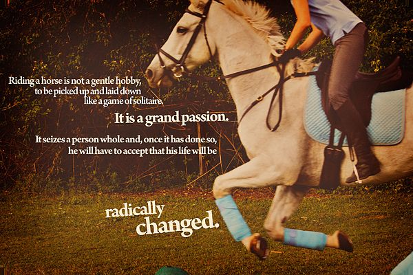 I am an equestrian quotes