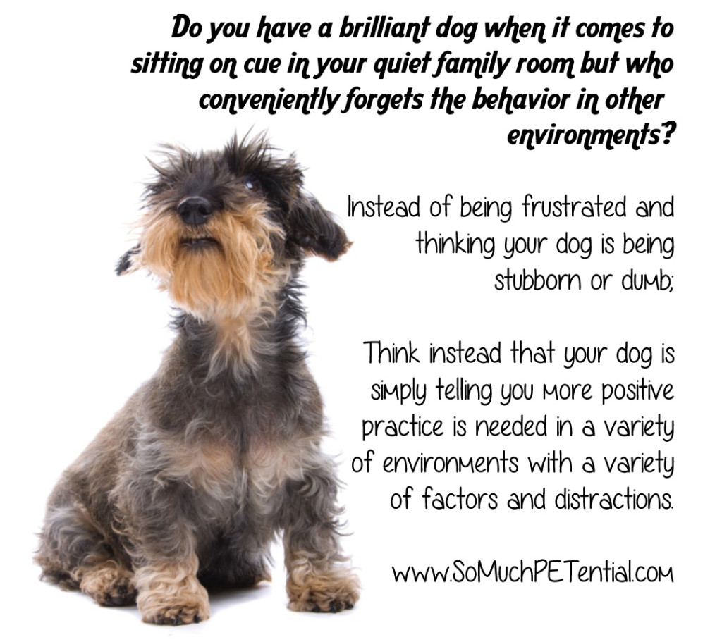 Quotes About Dog Obedience 23 Quotes