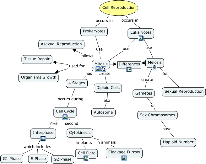 Quotes About Cell Reproduction 24 Quotes
