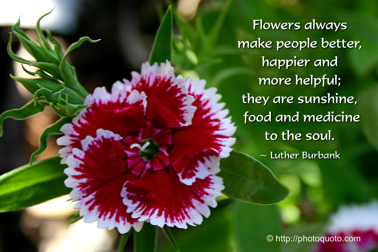 Quotes About Flower Garden 60 Quotes