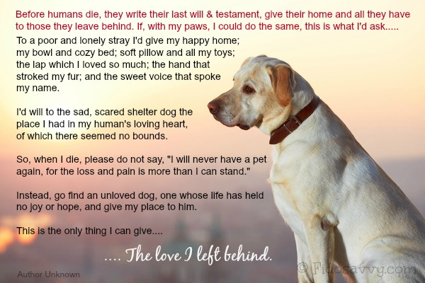 my experience of losing a beloved dog As anyone who has lost a beloved dog knows, it isn't just a dog when you are dealing with loss losing a pet that you love hurts a great deal, and you need to allow yourself time to grieve, reminisce, feel frustrated, or whatever emotion it is that you are feeling, because it's perfectly acceptable.