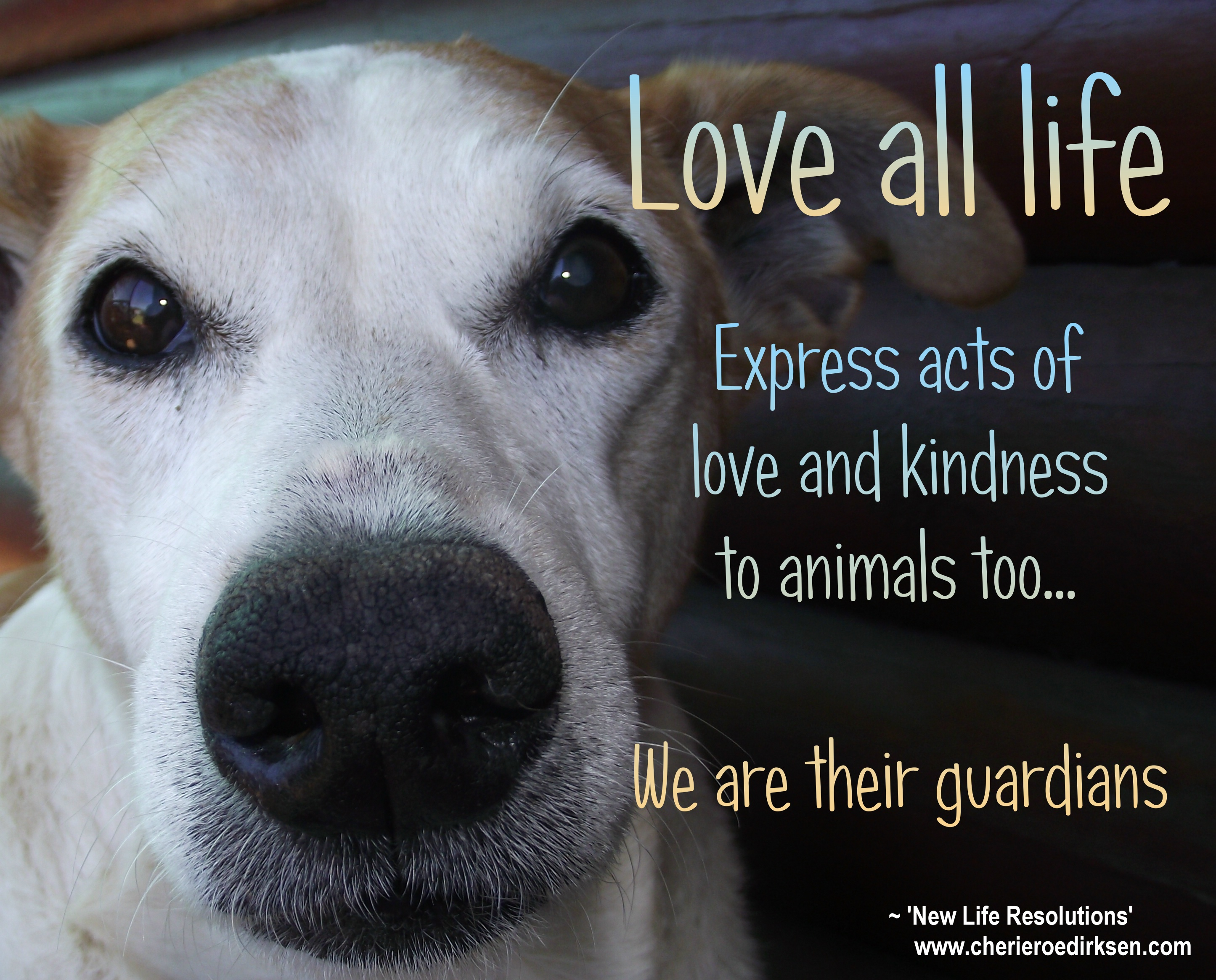 Quotes About Love Of Animals 170 Quotes