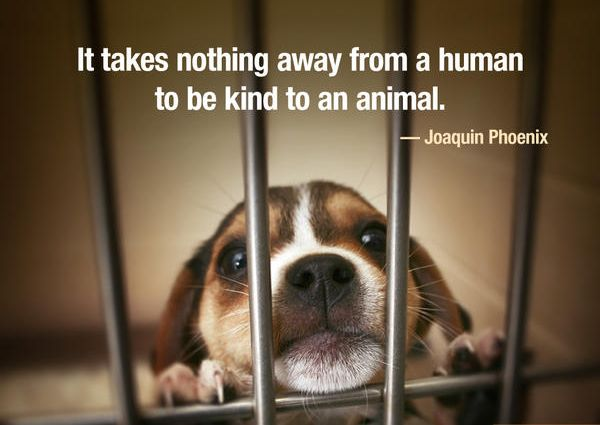 Quotes About Animal Neglect 25 Quotes