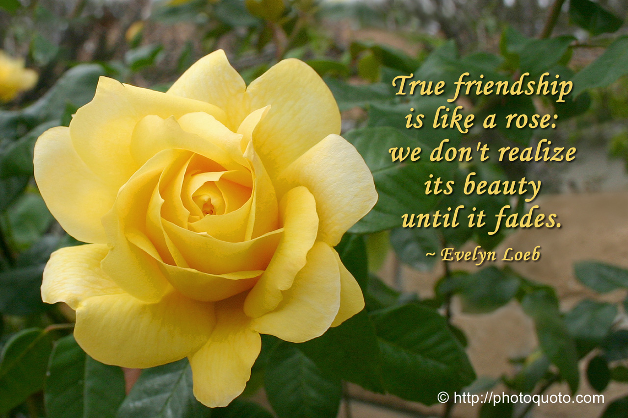Quotes About Garden Roses 75 Quotes