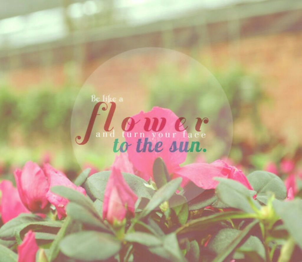 Flower Photography Tumblr Quotes For Kids