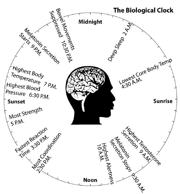 biological male clock essays Biological rhythms circadian rhythms a circadian for example mcclinktock found women working in all male environments is the dominant endogenous clock in.