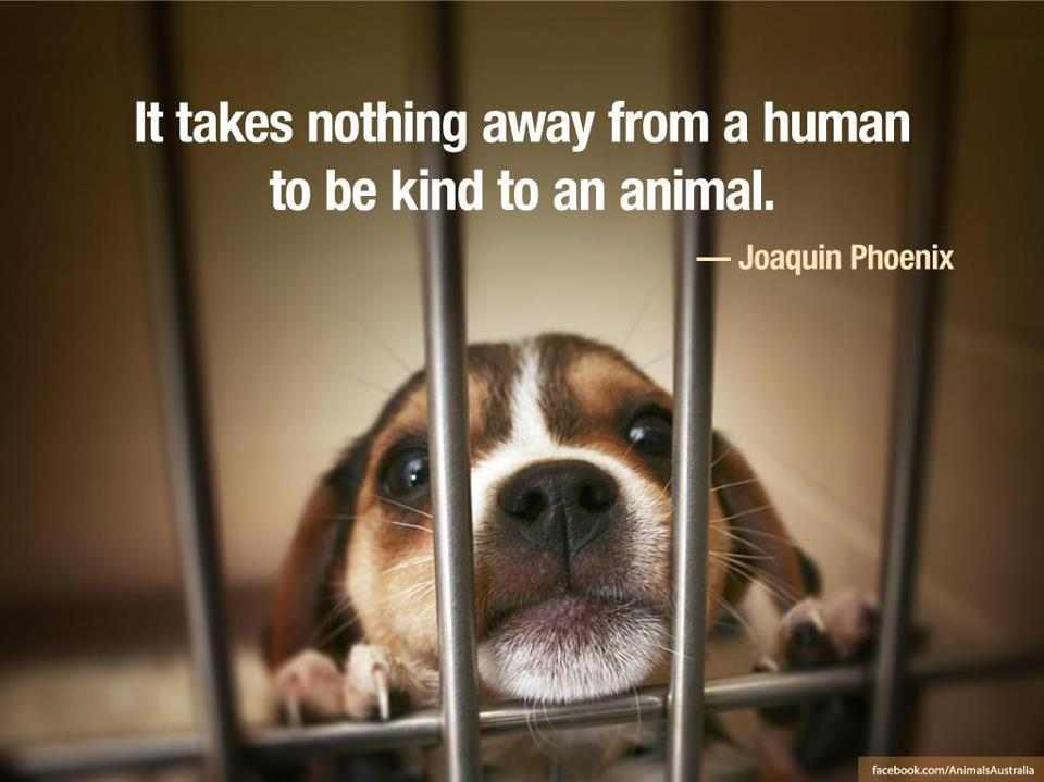 Quotes About Care For Animals 67 Quotes