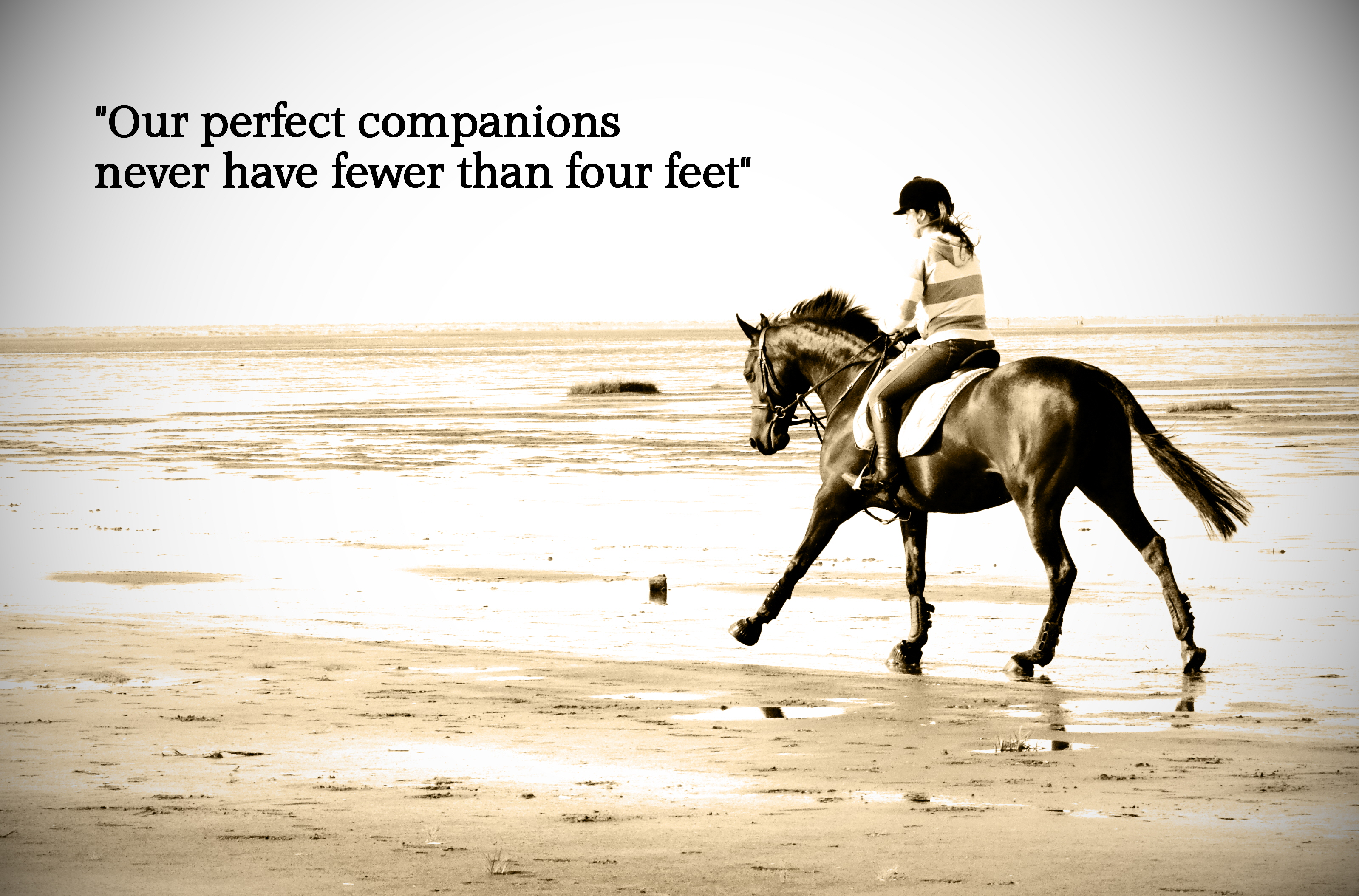 Fashion style Jumping Horse quotes pictures for girls