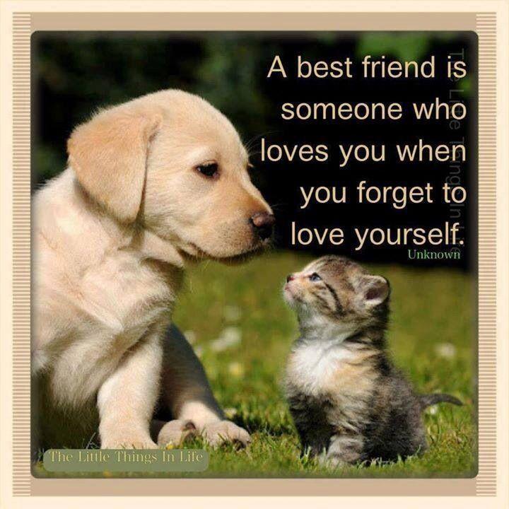 Quotes about Pet friends (27 quotes)