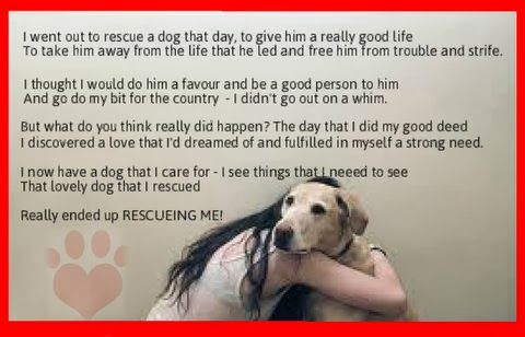Quotes About Animal Shelters 61 Quotes