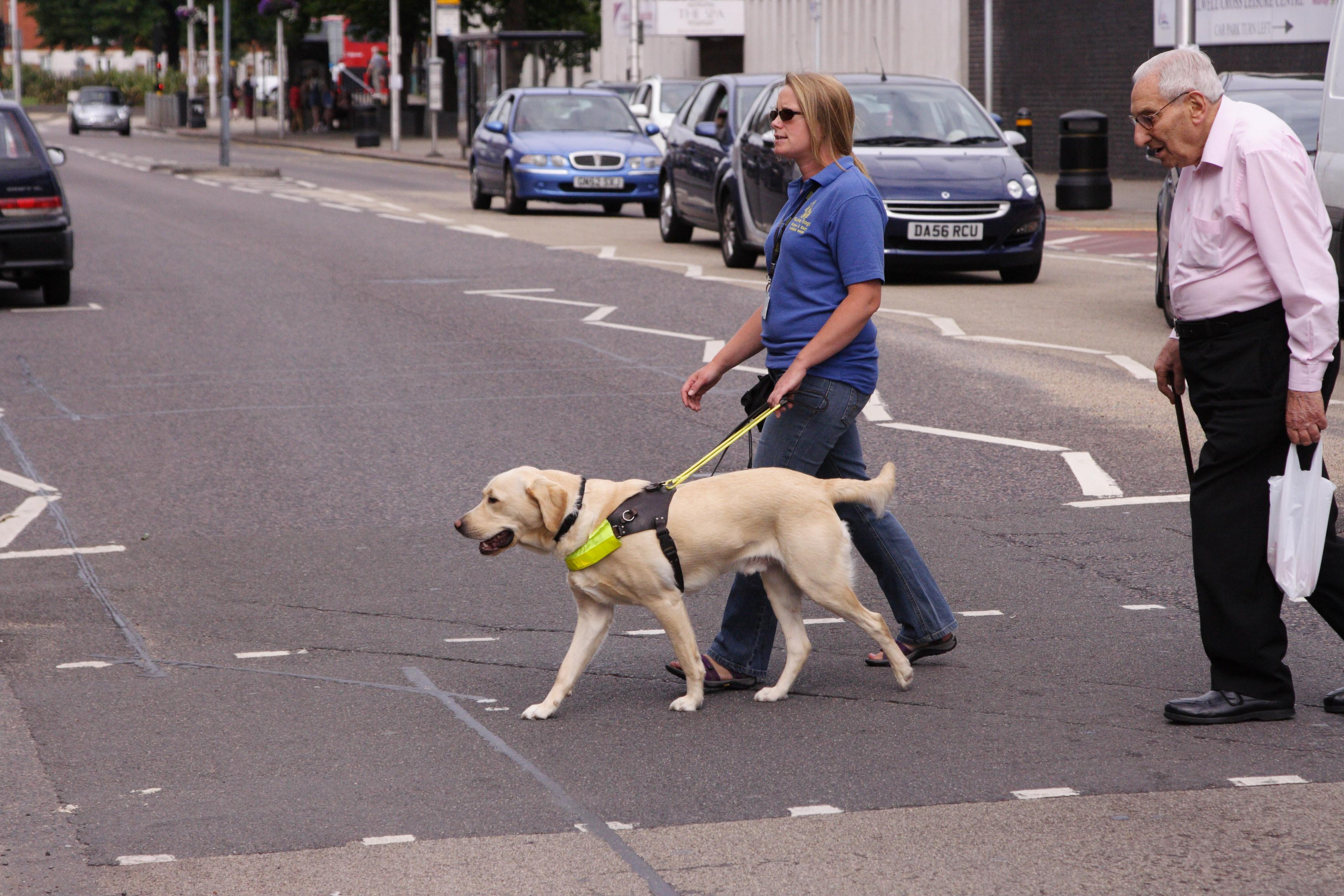 Quotes About Guide Dogs 50 Quotes