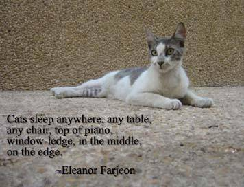 Quotes About Cats 543 Quotes