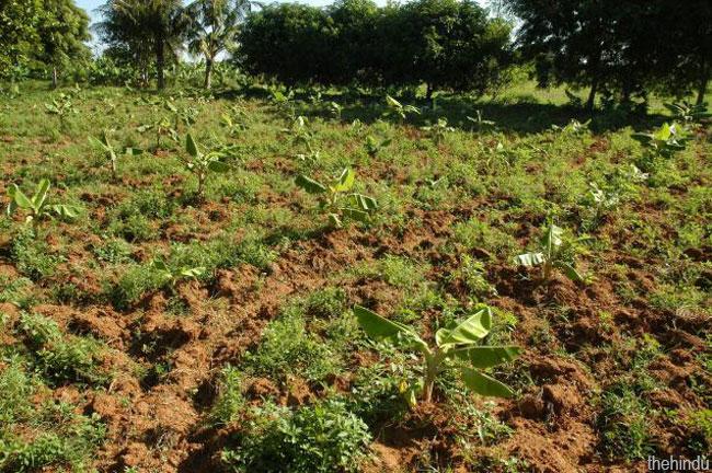 Organic farmer dating site