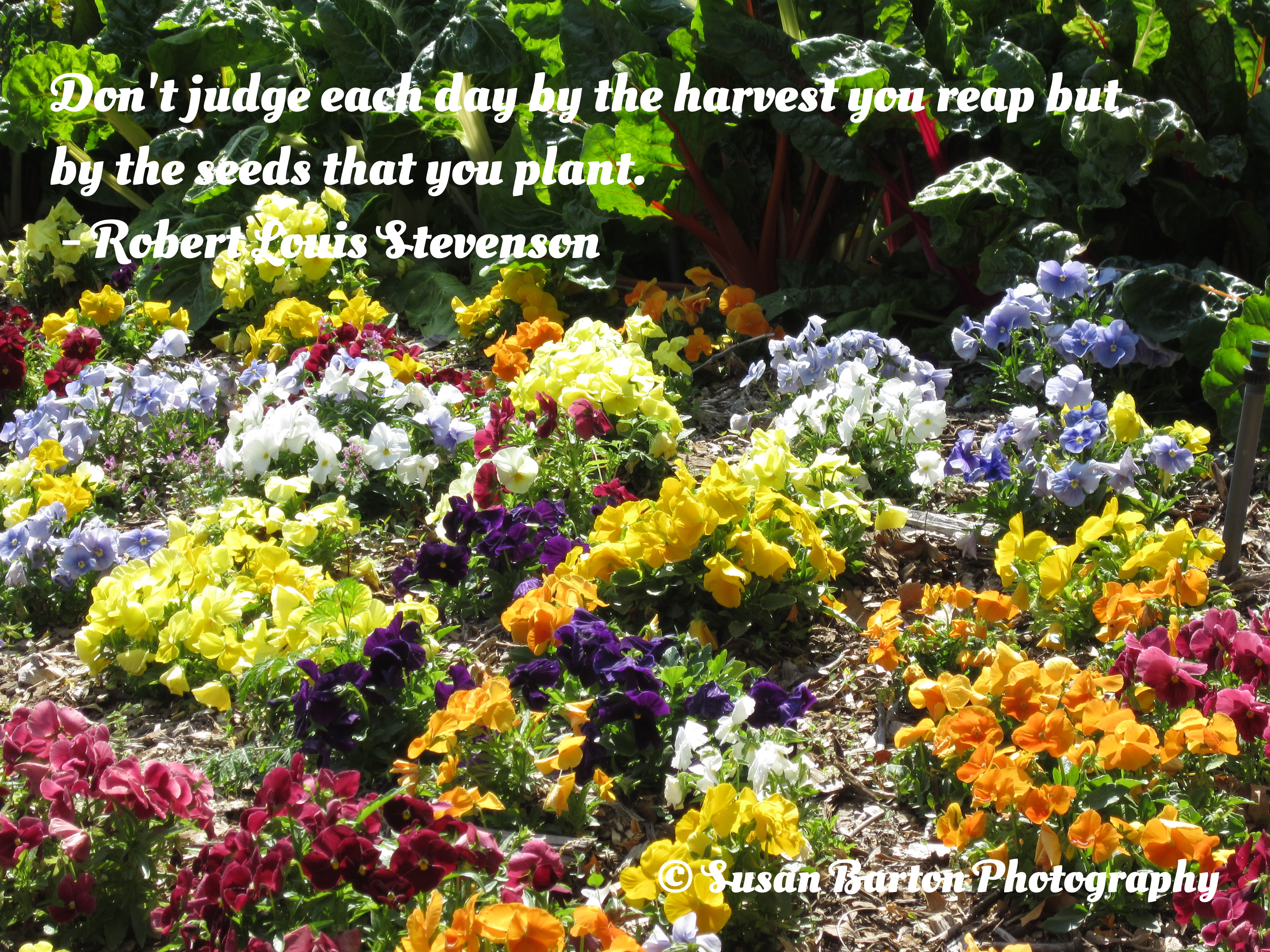 Quotes About Without Plants And Flowers 17 Quotes