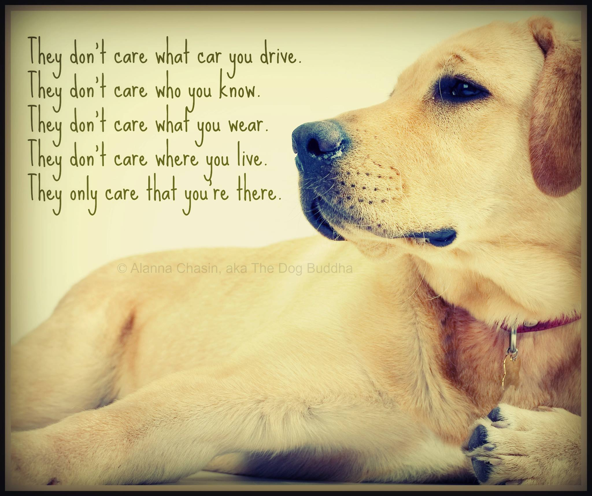 I Love My Dog Quotes Quotes About Love My Dog 53 Quotes