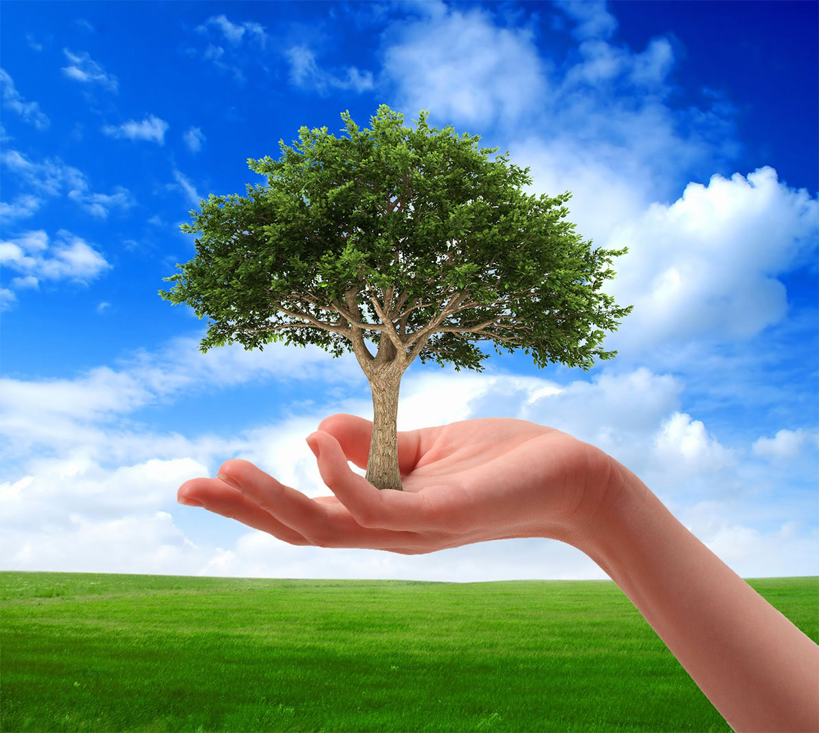 Essay On Environmental Conservation