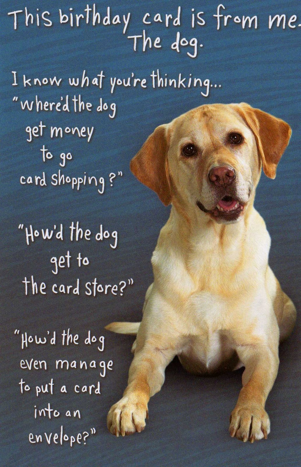Quotes About Dogs Birthday 22 Quotes