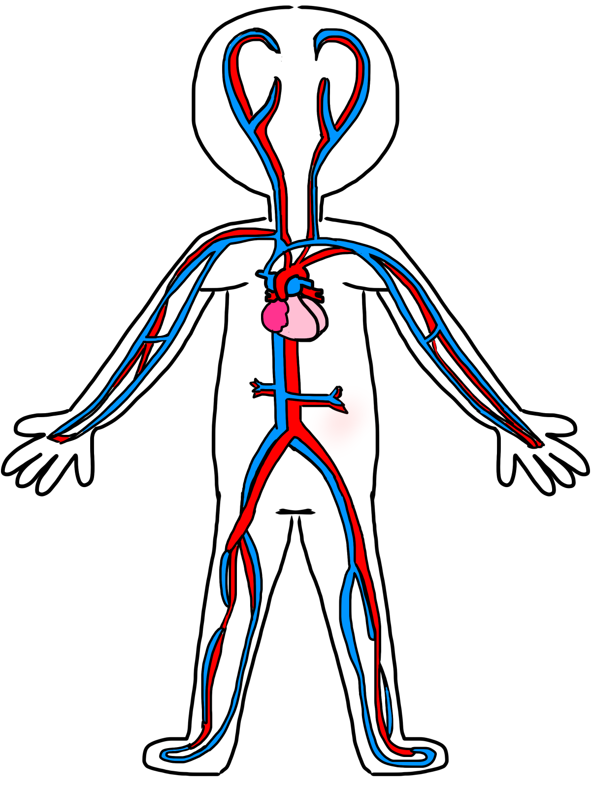 quotes about circulatory system (32 quotes)