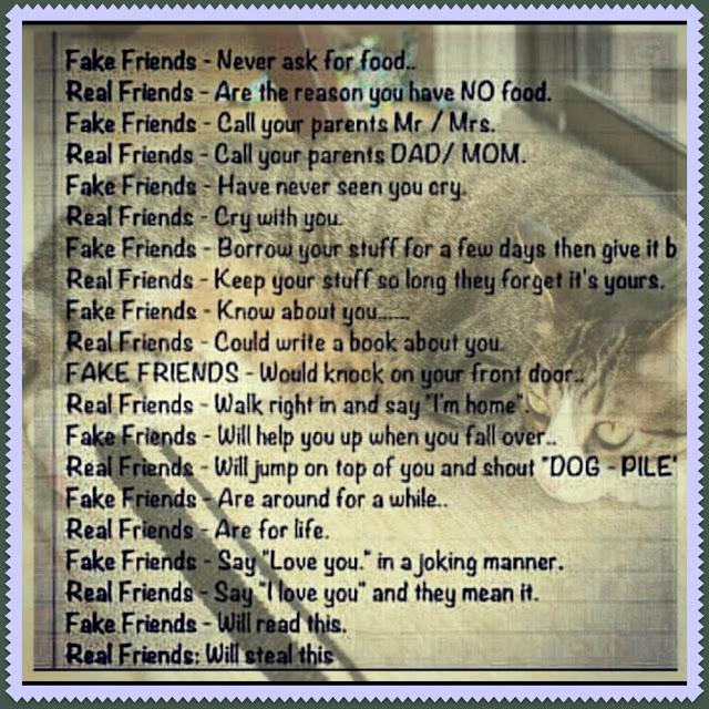 Quotes About False Friendship 26 Quotes