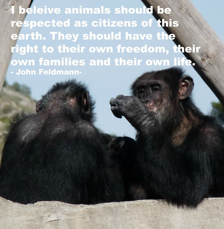 Quotes About Freeing Animals 38 Quotes