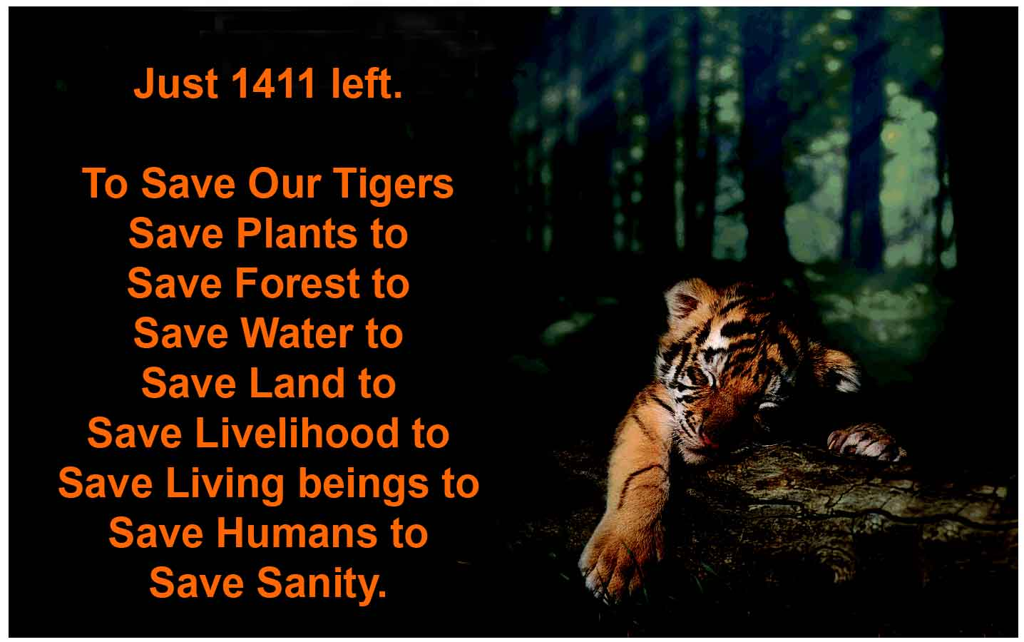 essay on save the wildlife Writing sample of essay on a given topic conserving natural resources conserving natural resources we conserve natural resources because of their natural beauty and cultural importance however, in present time's human activities has increasingly destroyed the environment.