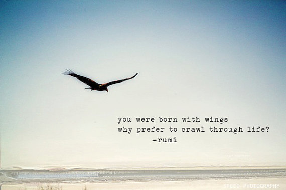 flying with wings essay