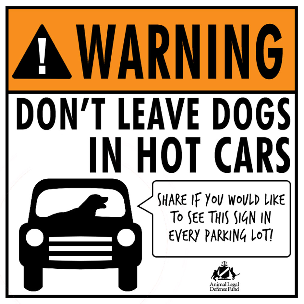 Dogs Die In Hot Cars Free Stickers