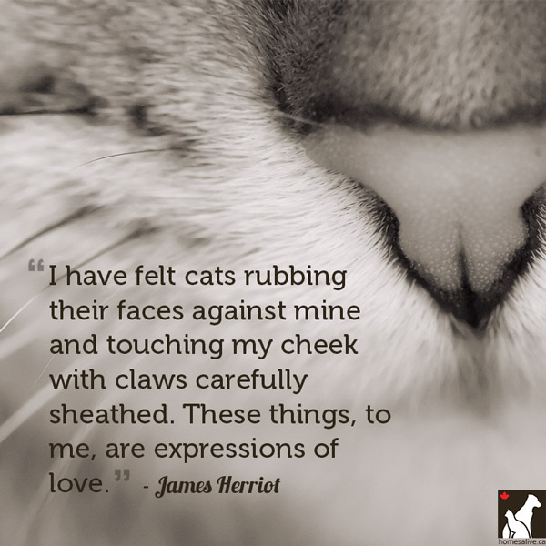 Quotes About Cats | Quotes About Cat Lover 28 Quotes