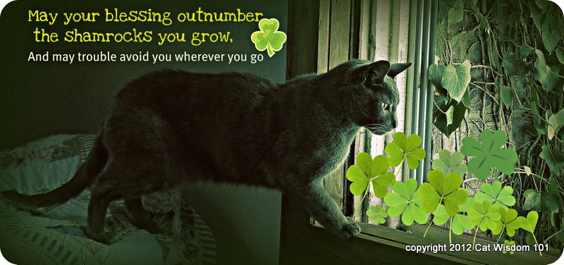 Image result for happy st patrick's day cat images