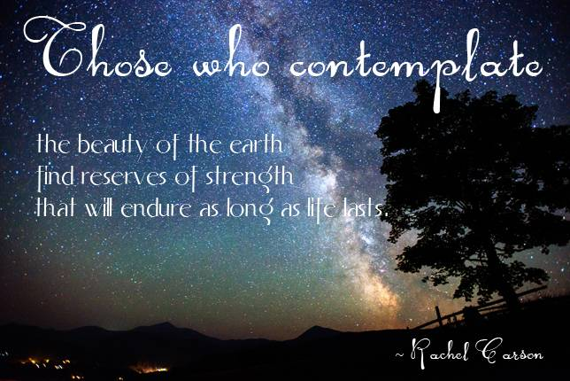 Quotes About Contemplating 60 Quotes Impressive Contemplating Life Quotes