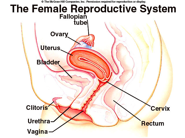 Quotes About Reproductive System 31 Quotes