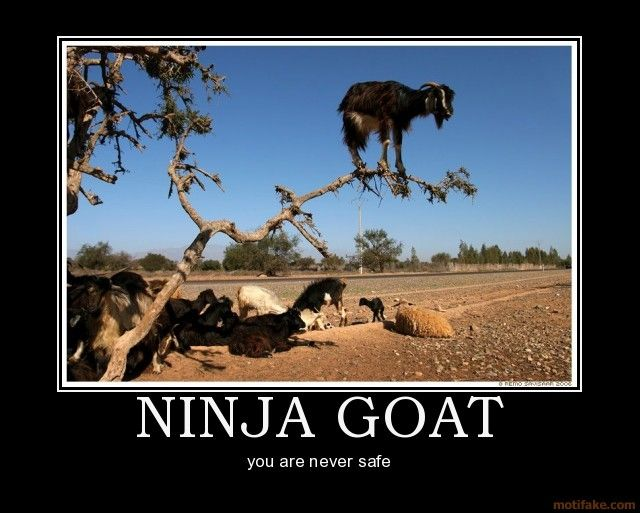 Goat Quotes Adorable Quotes About Goat 48 Quotes