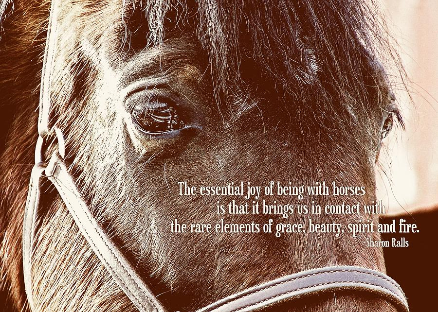 Quotes About Beautiful Horses 69 Quotes