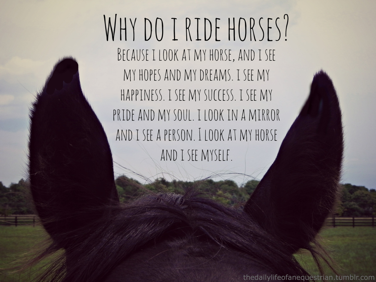 Horse Inspirational quotes tumblr pictures rare photo