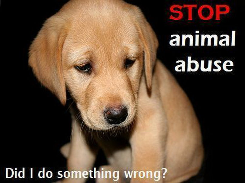 "an overview of the animal cruelty in the united states 3 comments on ""the best and worst 5 states for animals in the united and to the ones on the worst list better catch up animal abuse is the start to."