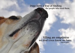 Dogs have a way of finding 
