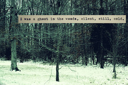 I was ghost in the woods, silent, still, cold.