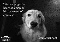 can judge the 