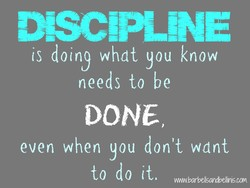 DSC!PLNE 