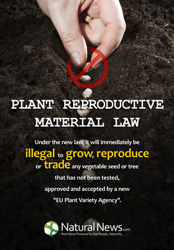 PLANT REPRODUCTIVE 